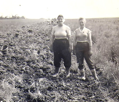 The Colbert sisters of Sawtry, potato picking. They also looked after about 30 Bullocks every winter.