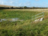 The Wetland on the Gidding Road Development, Sawtry. (After six months).