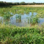 The Wetland on the Gidding Road Development, Sawtry. (After six months)