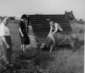Raising a pig at the Wyboston Land Settlement 1951