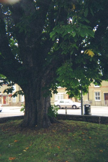 Old Chestnut tree at the White House, St Neots Rd, Eaton Ford, in June 2008