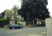 Copper Beech Tree in Huntingdon Street, St Neots in June 2008