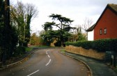 Tree in Little Paxton village on a road junction in 2007