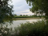 Little Paxton Gravel Pits Nature Reserve in July 2008