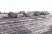 A fleet of combine harvesters about 1960