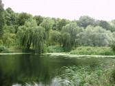 Scene at Paxton Pits Nature Reserve at Little Paxton in July 2010 (P.Ibbett)