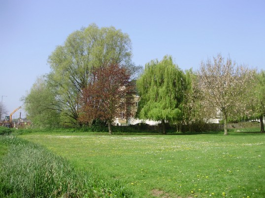 Looking across a daisy covered Regatta Meadow towards Cavendish Court in April 2009 (P.Ibbett)