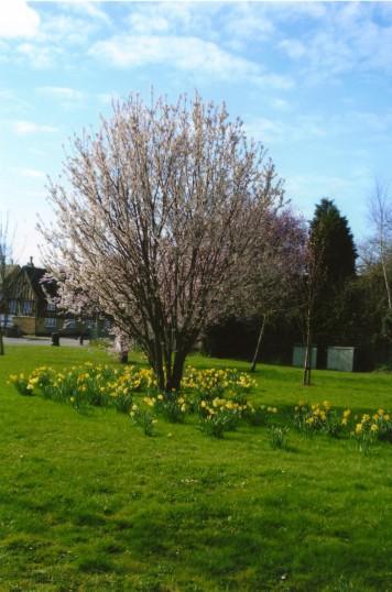 Springtime in Eaton Ford in April 2011