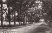 Avenue of trees on Priory Hill, St Neots in the 1940s