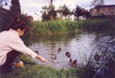 Feeding the ducks in the Riverside Park, St Neots, about 1990