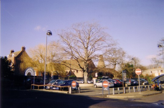 Large Copper Beech tree in Library Car Park, St Neots in April 2007