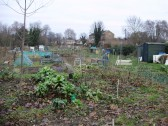 Allotments, Cemetery Lane, St Neots in January 2011 (P.Ibbett)