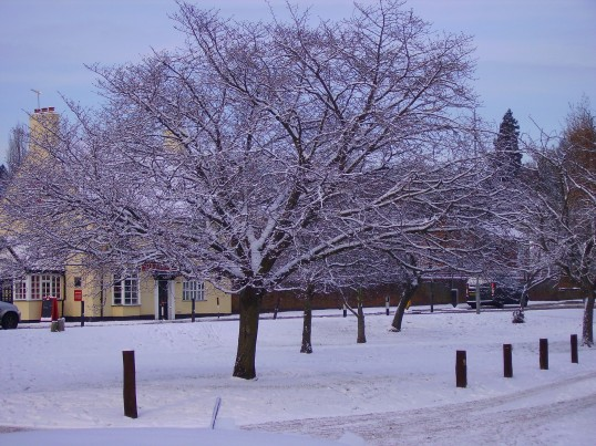 Eaton Socon Village Green - one of the trees in December 2010