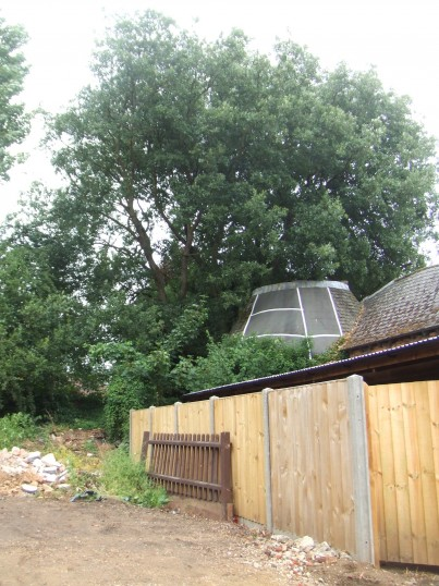 Semi-everygreen Oak tree at the former Soloprint printing premises in Eaton Socon - 30th July 2013