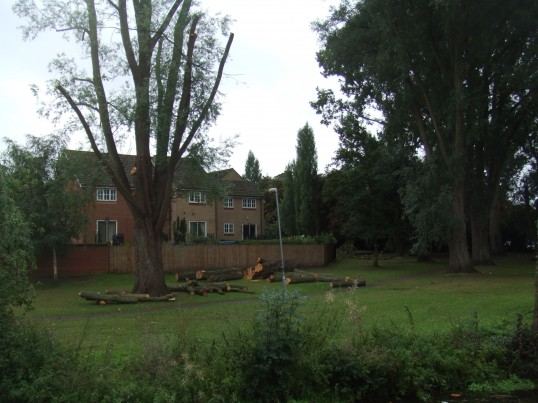 Tree cutting by Navigation Wharf, Eynesbury, on the grass by Henbrook - September 17th 2013