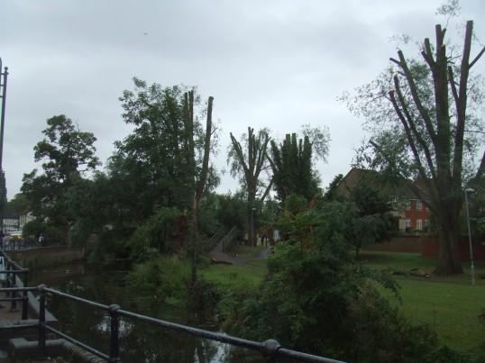 tree cutting Sep 17th 2013 pic 2