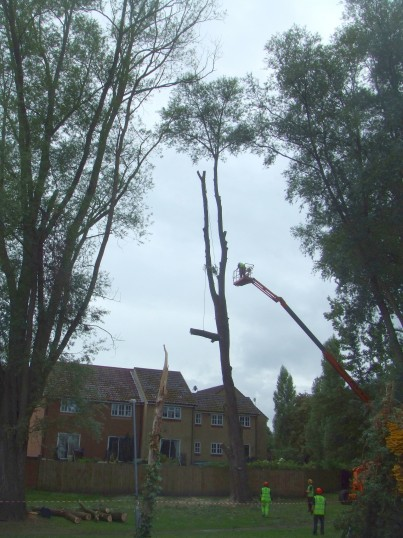 tree cutting Sep 9th 2013 pic 3
