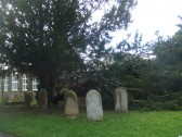 A branch has fallen from a tree in the St Neots Churchyard after the gales in February 2014