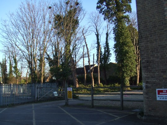Behind Cressener House, Huntingdon Street - March 17th 2012