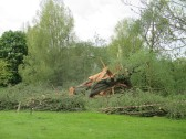 Willow tree in Riverside Park badly damaged by high winds on Tuesday 5th May 2015