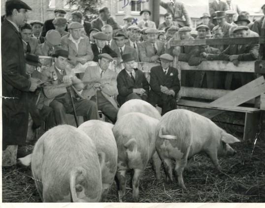 St Neots Livestock Auction 1954