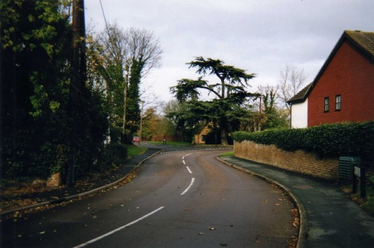 Cedar tree in Little Paxton - viewed from the High Street - December 2007