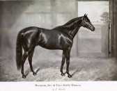 Hampton (1882-1897), owned by Lord Ellesmere. This TB stallion sired 3 Derby winners and is buried at Stetchworth Park.