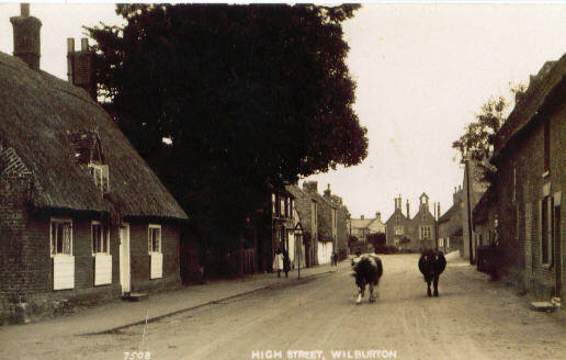 Cows in the High Street, Wilburton.