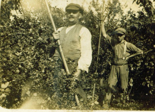 Working in the orchards, Wilburton