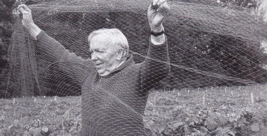 Mr Sneesby removing nets from grape vines in twenty pence vineyard Wilburton.