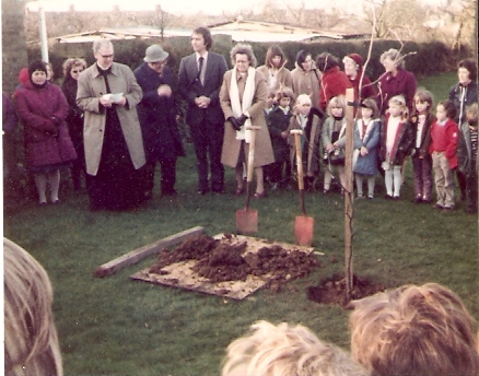 Copper-beech tree planted in memory of Mrs E Greene (school governer).
