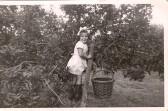 A little Apple picker, Glynis Barrett (nee Winters)