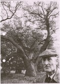 Mr Beauchamp Pell with the old oak tree. Woodman Woodman  spare that tree