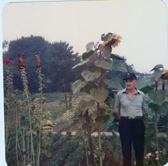 Frank Yarrow with his giant sun-flower