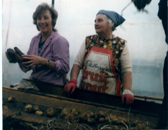 Monica Bartolotshi and Mrs Frank Yarrow sorting potatoes on the harvester