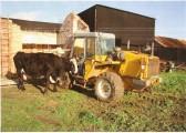 A cow belonging to Mrs Hilary Ladson of Martin's Farm Wilburton.