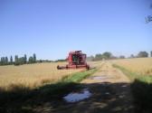 Adrian Furness combining corn on Mitchell's Farm Wilburton