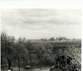 View of the house that the Morton familly lived in. Beehives in orchard in Stretham Road, Wilburton.