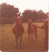 Bert Everitt with a couple of his horses