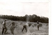 Harvest time, Wilburton