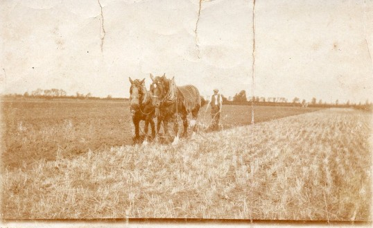 Robert Russel working with horses at Wilburton.