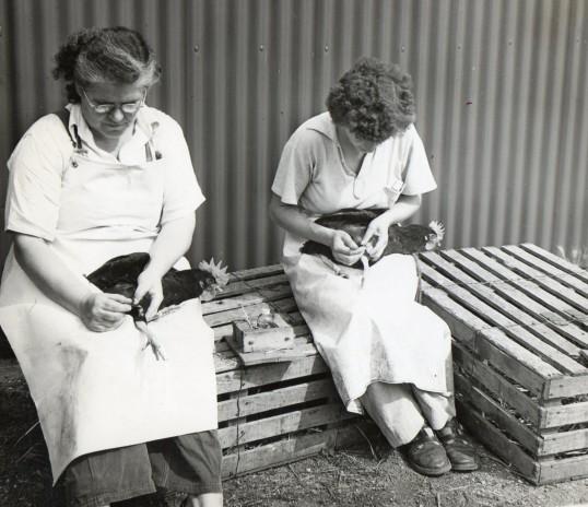 Workers at Flexon farm, Wilburton /Stretham.
