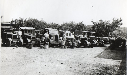 Pre-fergie tractors line up for feeding time, Wilburton/Stretham, Flexon farm.