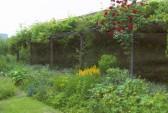 Open Gardens at Wilburton.