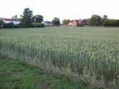 A crop at Wilburton