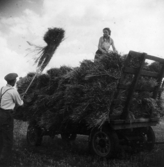 Arthur Douglas Seppings loading oats with land army girl