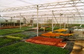 Glen Nurseries Bedding Plant Area