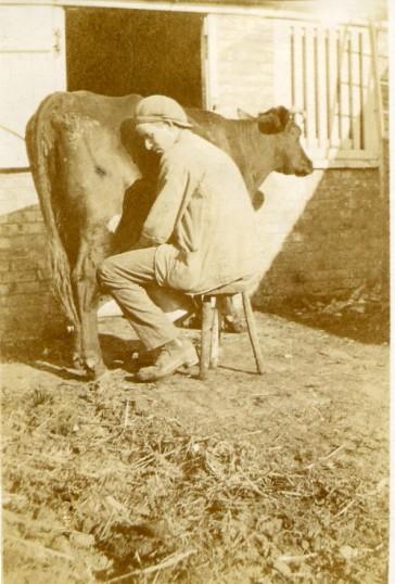 Arthur Seppings milking
