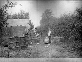 Upwell Farmer Henry Doubleday packing apples. Loaned by Judy Green