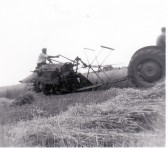 Harvesting corn with a binder